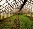 Innovation Lab for Horticulture