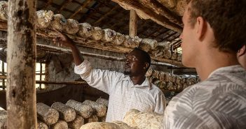 How Juncao Technology Can Address Food Insecurity in Africa